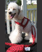 dog harness outfit from udogu